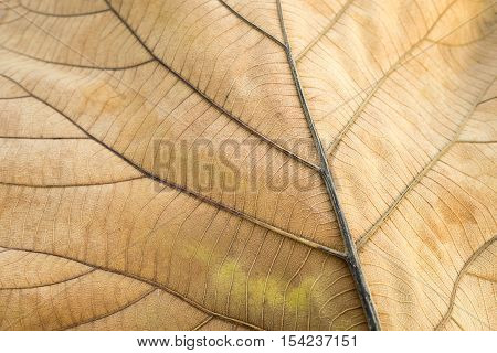 Closeup brown dry leaf texture background nature.