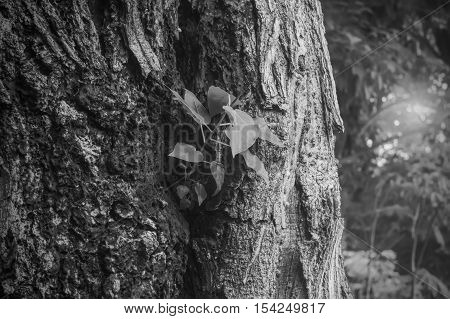 Sapling trees to regenerate. (The image is a black and white)