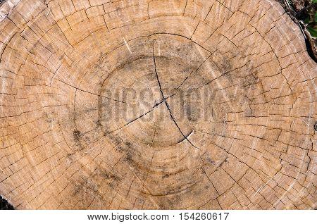 Tree stump background texture - Stock Photo