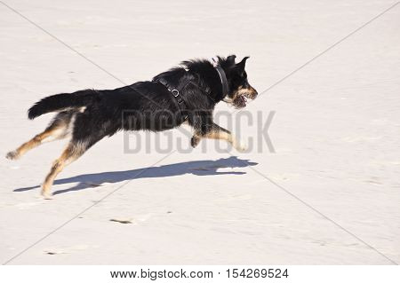 Young Dog