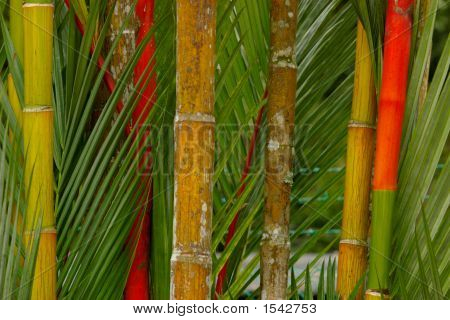 Big Colored Bamboo Macro