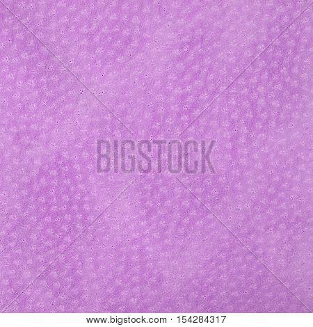 Fuchsia leatherette texture background. Square close up
