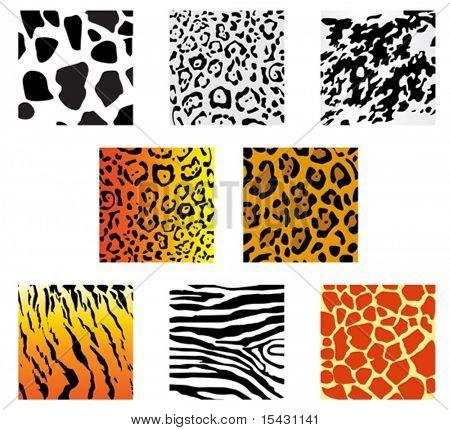 Versión de vector. Conjunto de pieles de animales y de las pautas de diseño de la piel. También está disponible la versión de JPEG