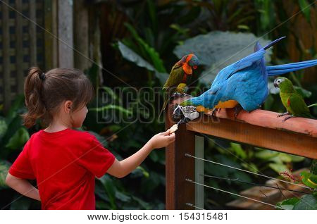 Little Child Feeds A Blue And Gold Macaw