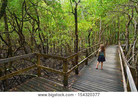 Daintree National Park Queensland, Australia