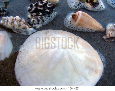Seashells Upclose