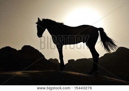 Beautiful silhouette of the horse in sunset