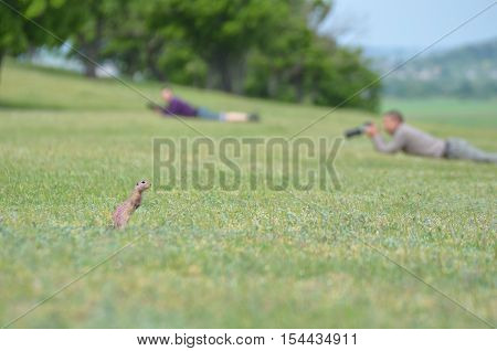 Funny gopher in green field against two blurry wildlife photographers in the background