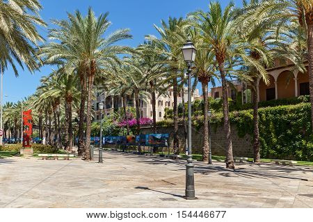Palma Spain June 25 2016 Palma de Mallorca resort. Palm trees on the street in downtown near the Palma de Majorca hotel.