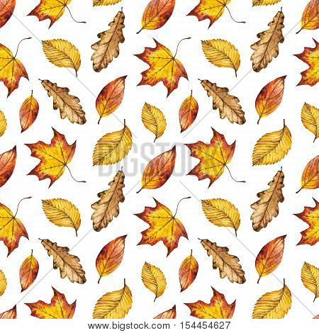 Seamless watercolor pattern of leaves oak, maple, elm, watercolour autumn background of yellow, orange and red leaves