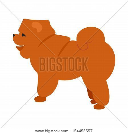 Flat pet chow chow and dog breed vector, puppy doggy character illustration