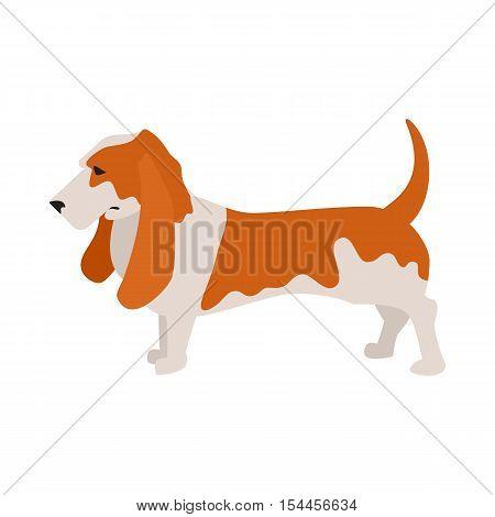 Basset hound dog and pet companion, purebred hound breed, vector illustration