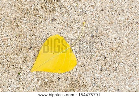 yellow leaf falling from a tree on sand in a garden