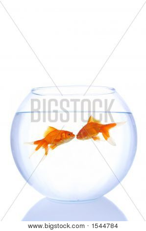 Goldfishes In Love