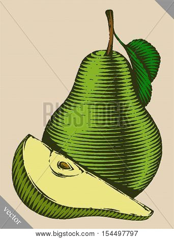Engraved isolated old-styled engrave vector illustration of a pear