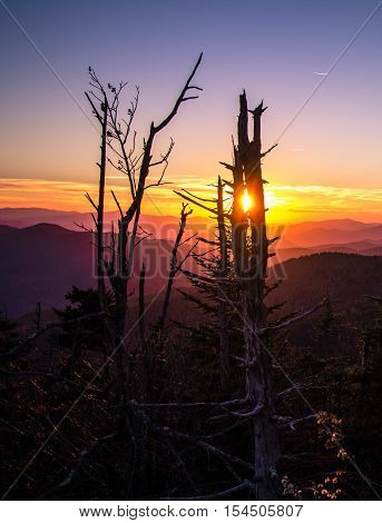 Smoky Mountain Sunset In Vertical Orientation. Sunset from Clingmans Dome overlook of the Great Smoky Mountains National Park. The Smokies are America's most visited national park surpassing even Yellowstone and Yosemite