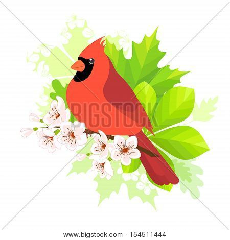 Cardinal bird sitting on blossom cherry branch. Spring concept for your design.