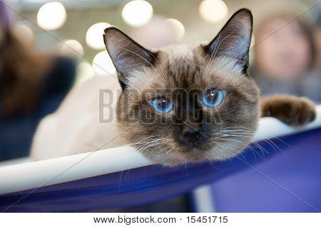 "International Exhibition Of Cats ""catsburg"""