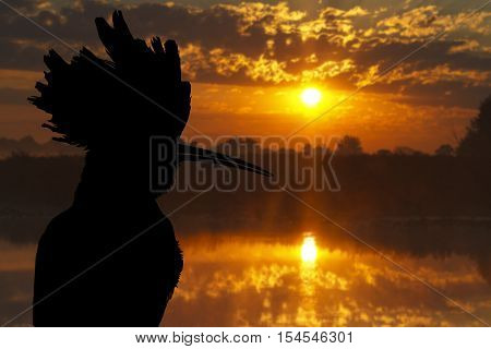 hoopoe silhouette against the backdrop of the lake, bird disappears, rare bird, beautiful bird