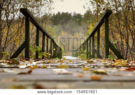 Autumn trail. The path with wooden railing in the forest. The dry yellow leaves in the foreground selective focus view from below.