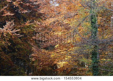 Trees With Beautiful Colorful Leaves In Autumn