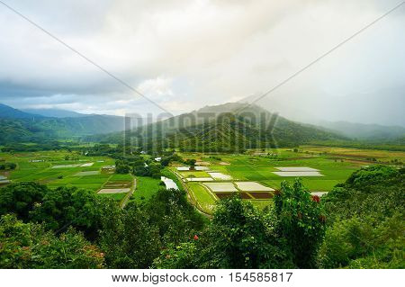 Taro Fields In Beautiful Hanalei Valley