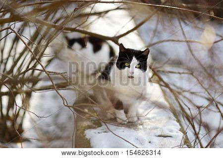 Two Cute Cats At Winter