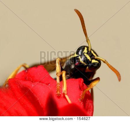 Wasp...(5)