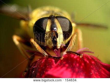 Wasp...(12)