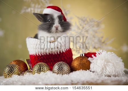 Bunny with Rabbit, christmas red Santa hat on winter decoration