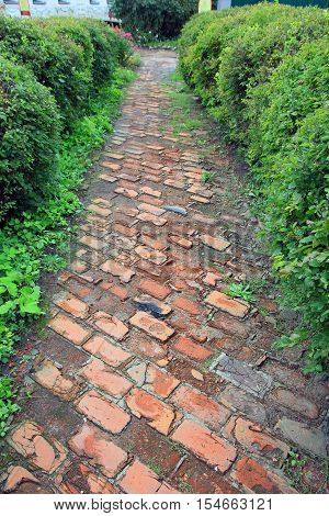 beautiful stone walking path paved with red brick with green grass and bush