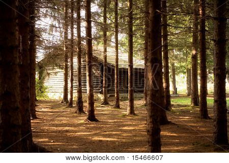 small wooden  cottage in forest, sunny  autumn day