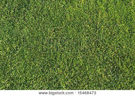 una pieza verde de un patrón de hierba