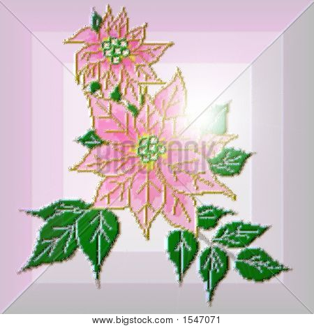 Graceful Pink Poinsettia