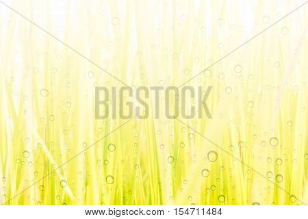 Abstract Drops of dew on the beautiful green grass background