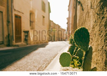 Cactus beside road in quiet french village