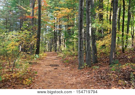 trail with fallen leaves in the autumn woods
