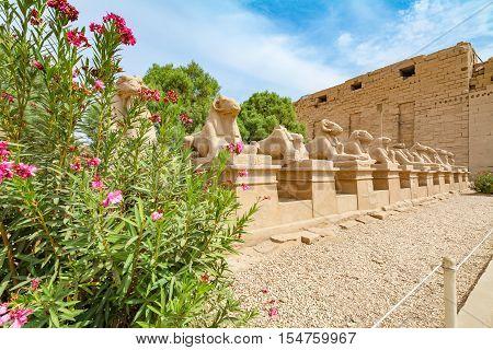Avenue of the ram-headed Sphinxes. Karnak Temple. Luxor Egypt