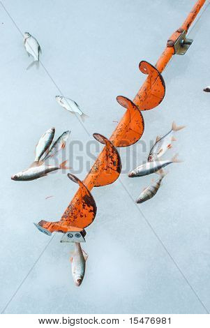auger and fish on blue ice