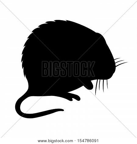 Hispid cotton rat ( shade picture )
