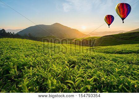 Malaysia tea plantation at Cameron highlands with hot air ballon in morning in Malaysia