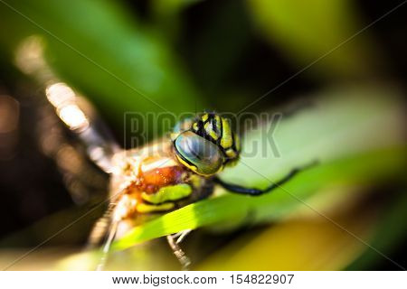 Closeup of the dragonfly sitting on the green grass