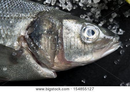 Close Up Of Fresh Seabass