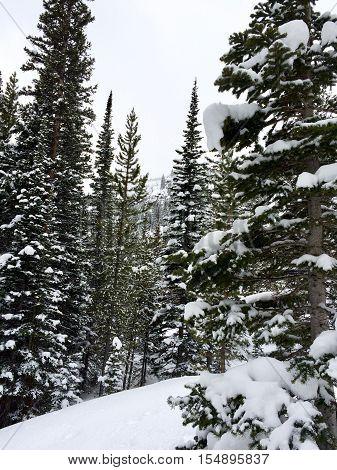 Untouched winter snow in the quiet woods