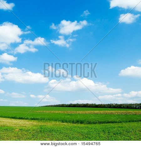 The field and blue sky.