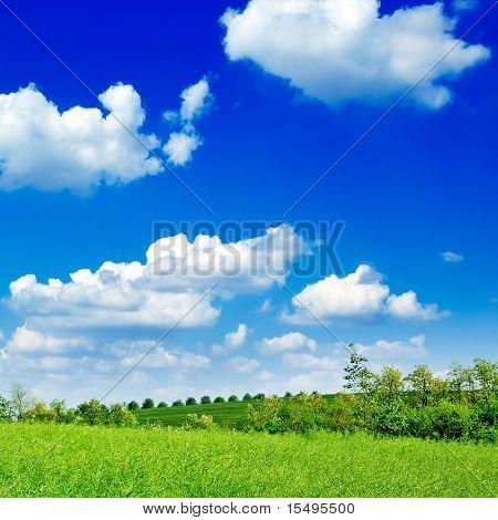 Der Baum, grün Feld, blauen Himmel. Die ländliche Landschaft.
