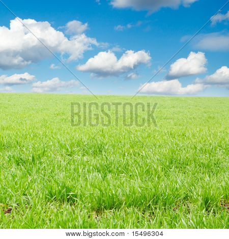 spring field covered by a grass