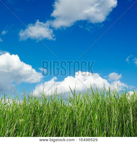 campo de primavera verde, cubierto por una hierba y el hermoso cielo azul