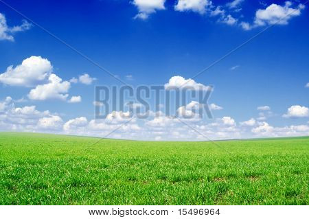 green field covered by a grass