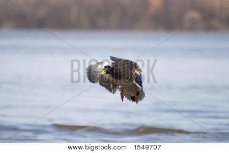 Duck Landing 2